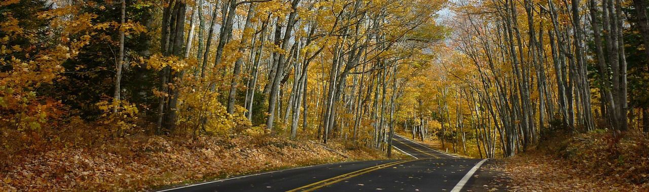 highway surrounded by northern trees
